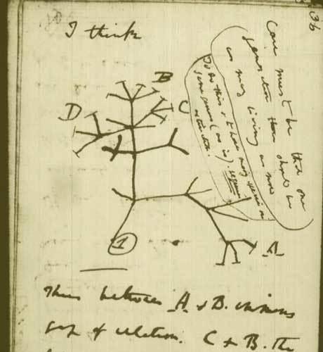 Árvore de Darwin