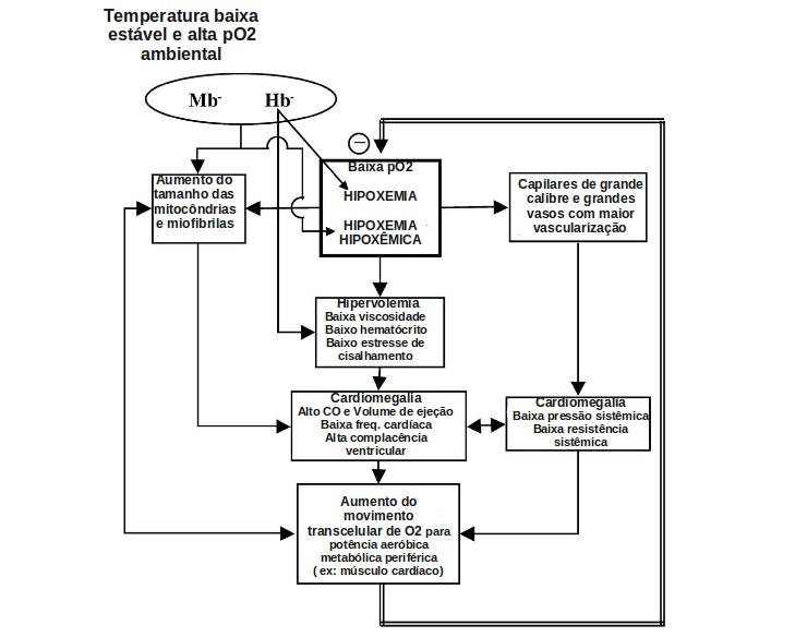 ... homeostáticos e de transdução do sinal associados aos processos  envolvidos na resposta à perda de pigmentos respiratórios. O diagrama  baseado em vários ... 8fe1934ecabfd